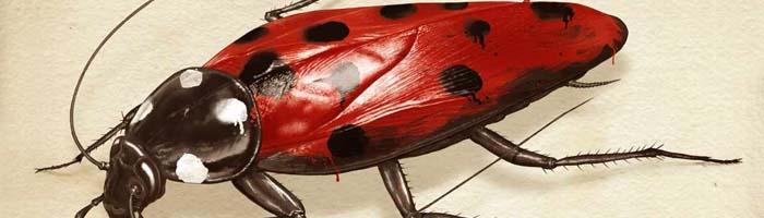 Cucaracha que se disfraza de mariquita