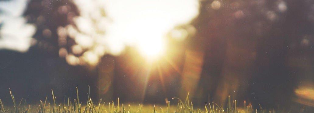 jardín con reflejo de sol de la mañana