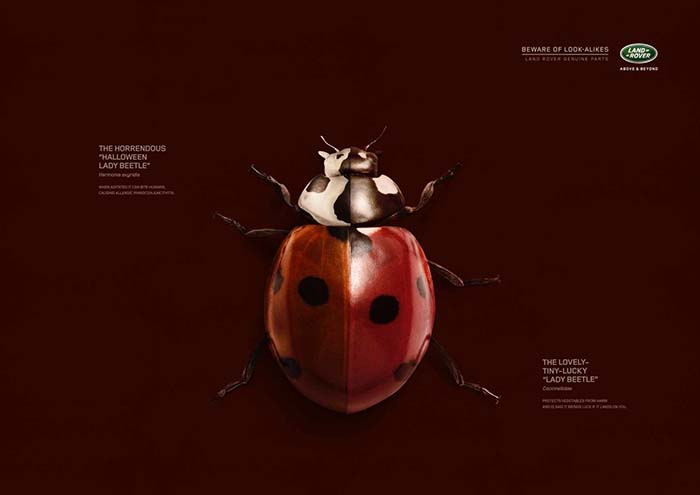Anuncio de Land Rover. Escarabajo negro pintado de mariquita rojo y negro.