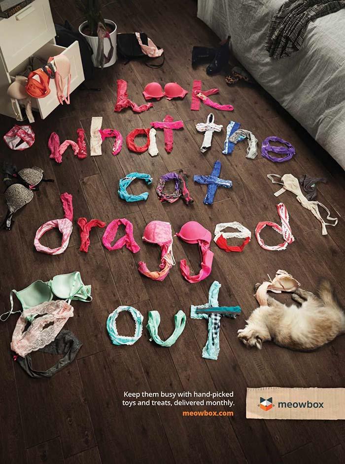 Anuncio de Meowbox gato destrozando la lencería de su dueña.
