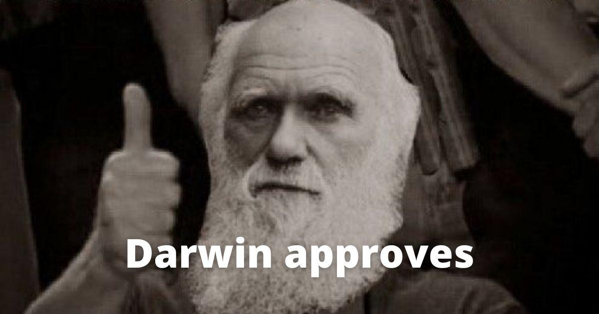 sistema de recompensa y evolución
